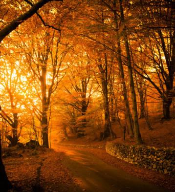 Zlatna Jesen